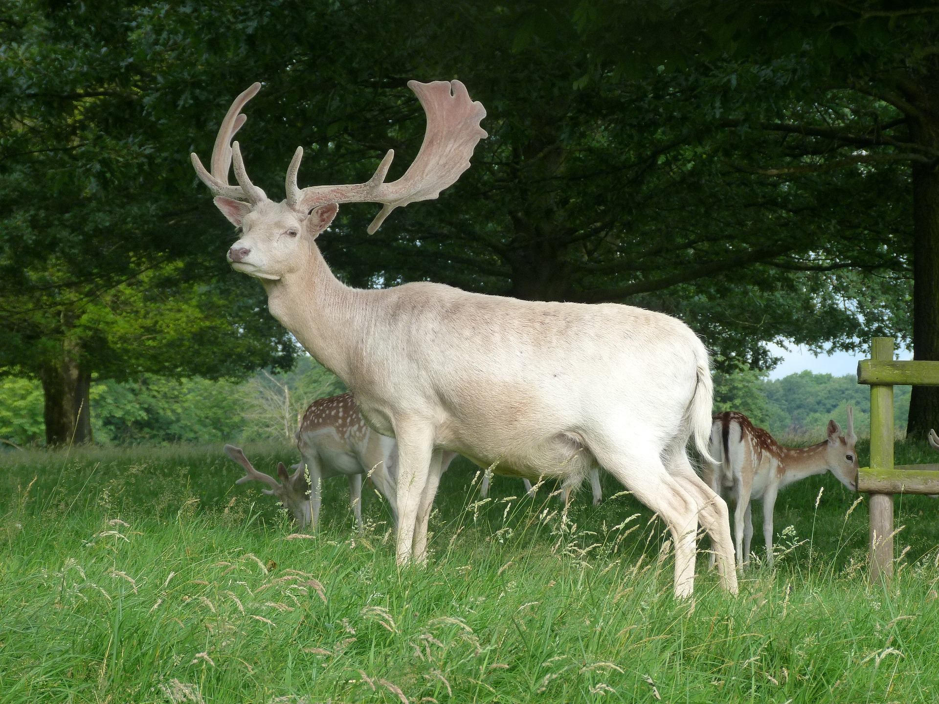 a white stag - regarded as a sacred animal by many